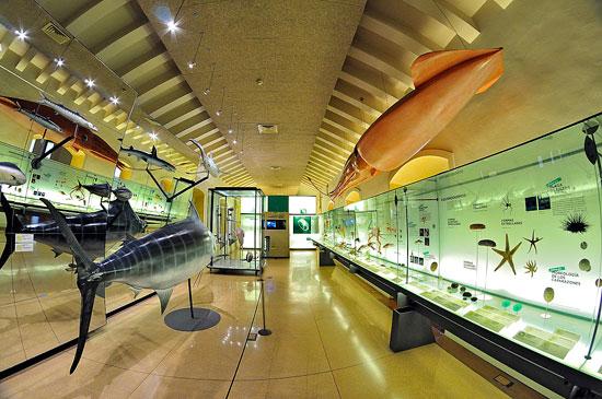 Sala biología marina en el Museo de La Naturaleza y El Hombre