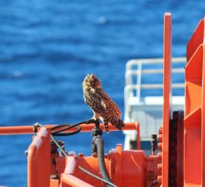 "Keith ""the crane owl"""